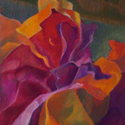 Bougainvillea, Soft Pastel, 16 x 12