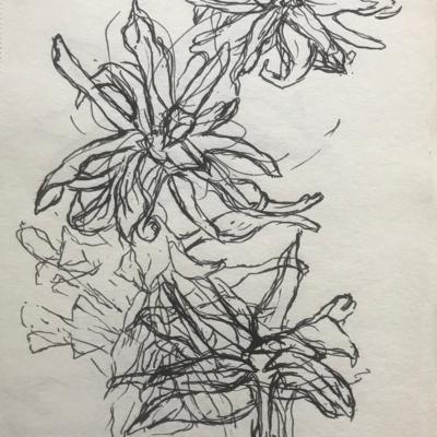 Metamorphosis, Ink Drawing, 8.5 x 5.5